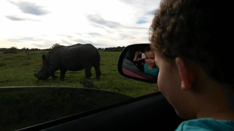 Rhinoceros viewed by child