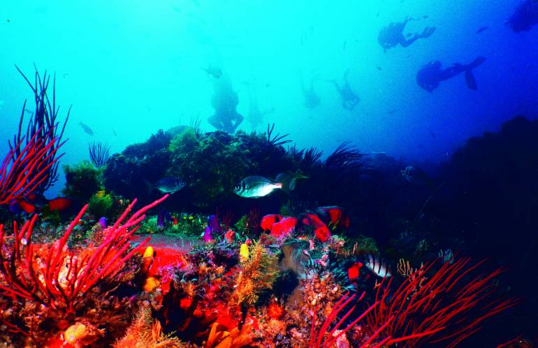 scuba diving algoa bay