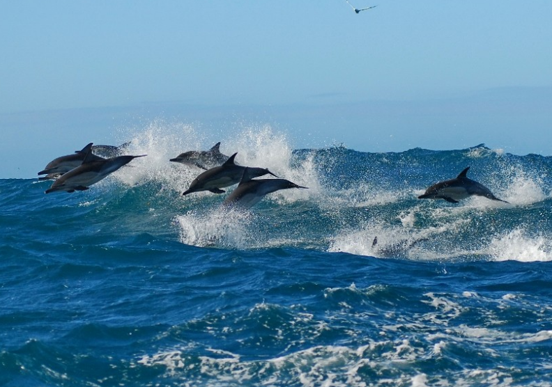 Dolphin, whale and penguin watching in Port Elizabeth ...
